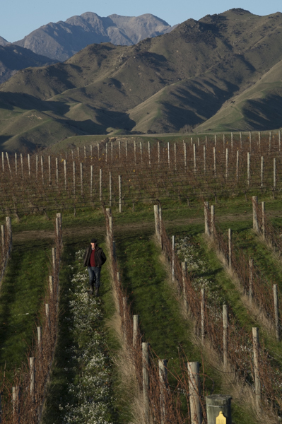 Sam Weaver, Churton Wines, Marlborough, New Zealand, biodynamic