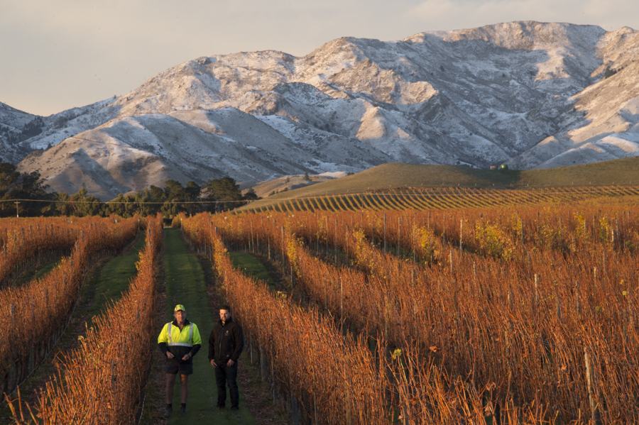 Viticulturalist Stuart Dudley & Vineyard manager Kevin in shorts true Kiwi style, Villa Maria, Marlborough, New Zealand