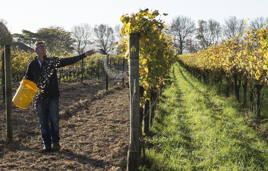 biodynamic, wine, vineyard, new zealand, Milton